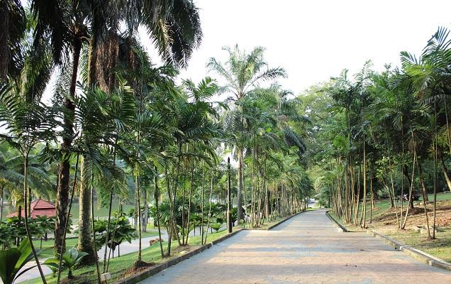 lake garden (1)